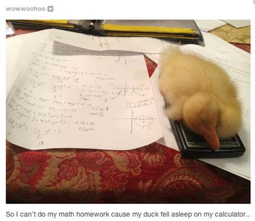 funniest-pictures-2013-duck-homework