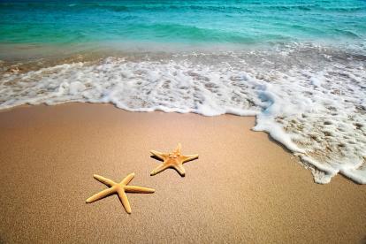 Starfishes